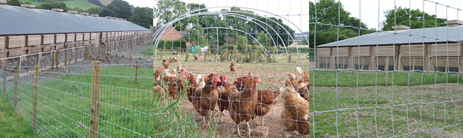 Poultry Fencing Drumnakilly Supplies Ltd Omagh Co